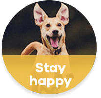 Stay happy at Waglands