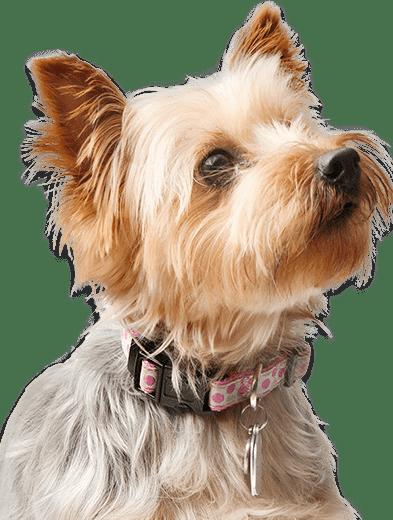 Background image of dog