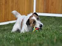 Dog resting on grass at Waglands