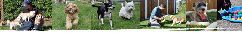 Selection of images of dogs having fun at Waglands - Bookings-header