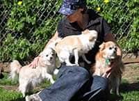 Stay Safe - Chihuahuas enjoying company at Waglands
