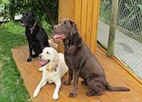 Stay Safe - Dogs enjoying quite company