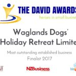 The David Award - Most Outstanding Established Business Finalist 2017